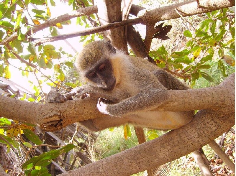 forest monkey