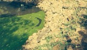 Crocodile blending in the rocks