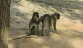 abuko-nature-reserve
